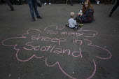 Too many sheep in Scotland. Yes Campaign Chalk graffiti in George Square the day after polling day in the Scottish Independence Referendum. Glasgow, Scotland. - Jess Hurd - 19-09-2014