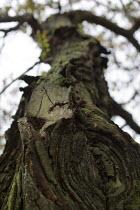 Sessile Oak Trees. Dolgoch Falls. Snowdonia National Park. Wales. - Jess Hurd - 26-10-2014