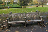 Squirrels eat nuts on a park bench. St James's Park. London. - Jess Hurd - 19-11-2014