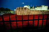 Ceramic poppies fill the Tower of London moat. Blood Swept Lands and Seas of Red, an art installation created by artist Paul Cummins, marks one hundred years since the First World War and each poppy r... - Jess Hurd - 03-11-2014