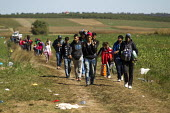 Refugees walking through fields towards the Tovarnik, Croatia border crossing. Serbia. - Jess Hurd - 21-09-2015