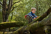 A young boy on a walk in Anses Wood, The New Forest. - Paul Carter - 2010s,2011,boy,boys,BRANCH,branches,child,CHILDHOOD,children,climb,climbing,country,countryside,infancy,infant,infants,juvenile,juveniles,kid,kids,LFL lifestyle & leisure,male,nature,outdoors,outside,