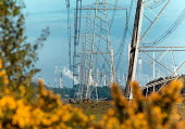 Looking through a flowering gorse bush, along electricity plyons to the chimneys of an oil refinery plant. - Paul Carter - 24-05-1994
