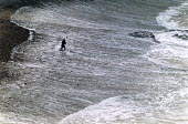 Man throwing stones into the surf, Crackington Haven, North Cornwall. - Paul Carter - 22-12-1989