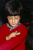 Young boy holding a stick insect. - Paul Carter - 1980s,1987,animal,animals,child,CHILDHOOD,children,class,classroom,CLASSROOMS,crawley,crawlies,creepy,EDU Education,handling,history,hold,infancy,infant,INFANTS,insect,insects,juvenile,juveniles,kid,k