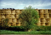 Bales of straw. - Paul Carter - 25-08-1999