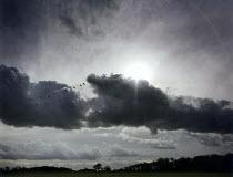 Geese flying across a cloudy sky. - Paul Carter - 01-10-1992