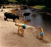 Families playing in a stream while two cows walk through the water. - Paul Carter - ,1990s,1997,agricultural,agriculture,animal,animals,bank,BANKS,bovid,bovine,boy,BOYS,cattle,child,CHILDHOOD,children,common,country,countryside,cow,cows,domesticated ungulate,domesticated ungulates,EN