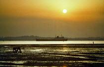 Ship sailing into Southampton docks at low tide. Taken at sunset. - Paul Carter - 05-03-2002