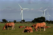 Windmills on farmland, Cumbria. Cows are grazing in a field next to them.This wind farm generates enough power for 2,000 homes, saving 8,530 tonnes of Greenhouse gases a year. - Paul Carter - 17-07-2000