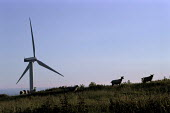 Silhouetted windmill surrounded by sheep, Winscales Moor Wind Farm, Cumbria - Paul Carter - 17-07-2000