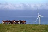 Livestock grazing in a field next to a windmill. Looking out to sea. Cumbria.This windfarm supplies 3,800 homes and saves 15,225 tonnes of greenhouse gasses a year. - Paul Carter - 17-07-2000