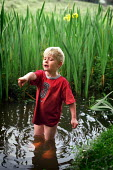 A young boy playing in a stream, The New Forest, Hampshire. - Paul Carter - 01-06-2002