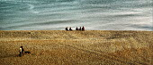 A group of friends sitting on a shingle beach looking out to sea. A couple walk their dog along the shingle. Brighton - Paul Carter - 12-05-2001