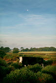 Cow in the gorse of The New Forest. - Paul Carter - 09-10-2003