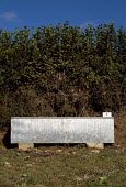 Bright stainless steel water trough next to a hedge. - Paul Carter - 10-05-2003
