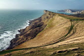 Looking along headland near Kimmeridge, Dorset. - Paul Carter - 09-01-2004
