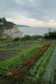 Allotments above the sea. Beer, Devon. - Paul Carter - 08-04-2004