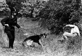 Police dog and picket, mass picket at Orgreave coke works, Miners Strike. - John Sturrock - ,1980s,1984,adult,adults,animal,animals,CLJ,DISPUTE,DISPUTES,dogs,INDUSTRIAL DISPUTE,mass,mass picket,MATURE,member,member members,members,MINER,Miners,MINER'S,miners strike miner's strike NUM,miner's