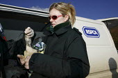 RSPCA workers treat an injured guillemot bird taken from the beach at Branscome near the stricken cargo ship MSC Napoli. Charcoal solution is pumped into the bird to force vomiting to clear oil from t... - Justin Tallis - 25-01-2007