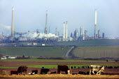 Texaco petrochemical refinery in Rhoscrowther, Milford Haven, Pembrokeshire. - Justin Tallis - 07-02-2007