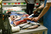 Filleting fish in the fish section of the Birmingham Wholesale Market. - Justin Tallis - 12-10-2007