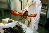 Clawed Lobster in the fish section of the Birmingham Wholesale Market. - Justin Tallis - 12-10-2007