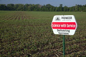 A corn crop planted with hybrid seeds marketed by Pioneer Hi-Bred. - Jim West - 23-05-2010