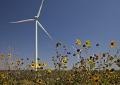 Wind turbines and sunflowers in west Texas. USA - Jim West - 13-10-2010