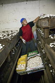 A worker picks mushrooms at the Rakhra Mushroom Farm. USA - Jim West - American,2010,2010s,AGRICULTURAL,agriculture,Alamosa,America,American,americans,BAME,BAMEs,BME,bmes,capitalism,capitalist,Colorado,cultivation,Diaspora,diversity,EARNINGS,EBF,Economic,Economy,employee