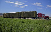 A set of triple trailers loaded with hay bales from a ranch in Nevada USA - Jim West - 05-07-2011