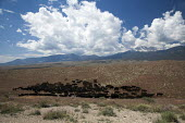 Riders move cattle to a new pasture on the Baker Ranch, Nevada, USA - Jim West - 05-07-2011