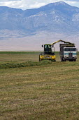 Harvesting alfalfa hay on a Ranch in Nevada, USA - Jim West - American,2010s,2011,agricultural,agriculture,alfalfa,America,American,americans,capitalism,capitalist,country,countryside,crop,crops,cut,cutting,driver,drivers,driving,EBF,Economic,Economy,employee,em