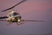 A helicopter spraying a field in the Imperical Valley at dusk. Night aerial application has resulted from the rising cost of pesticides and the increasing immunity built up by continuous spraying whic... - Jim West - 27-01-2012
