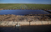 A farm field in California's Imperial Valley irrigated with Colorado River water brought through canals to water the desert. USA. - Jim West - 28-01-2012