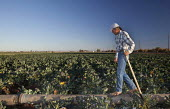 A worker preparing to irrigate a broccoli field in the Imperial Valley. Farms such as this in the Sonoran Desert are irrigated with water from the Colorado River, brought to the Valley through the All... - Jim West - 28-01-2012