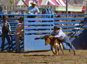 The chute dogging, or steer wrestling, also known as Bulldogging, event in the masters division (Age 40+) of the Native American Tohono O'odham Nation All Indian Rodeo. USA. - Jim West - 02-02-2012