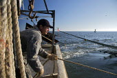 Mobile, Alabama - A shrimp trawler on Mobile Bay. Darrell Goleman brings in the trawl net. The trawler is part of the Alabama Fisheries Cooperative. - Jim West - 08-11-2012