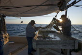 Mobile, Alabama - A shrimp trawler on Mobile Bay. Jackie Schwartz (left) and Darrell Goleman examine the contents of a try net, a small net lowered for a few minutes to determine what the catch is lik... - Jim West - American,2010s,2012,Alabama,America,American,americans,animal,animals,Bay,boat,boats,catch,catching,Coast,coastal,coasts,commercial,coop,Cooperative,co-operative,cooperatives,co-operatives,crew,crewma