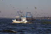 Mobile, Alabama - A shrimp trawler on Mobile Bay. Gulls and pelicans follow the boat to snap up the non-shrimp bycatch that is discarded. - Jim West - 08-11-2012