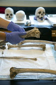 Waco, Texas - Forensic scientist Dr. Lori Baker and her students at Baylor University try to identify the remains of unidentified migrants who died trying to enter the USA without legal documents. Mos... - Jim West - 19-07-2013