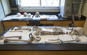 Waco, Texas. The remains of unidentified migrants who died trying to enter the USA without legal documents in the laboratory of Forensic scientist Dr. Lori Baker and her students at Baylor University... - Jim West - 19-07-2013