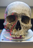 Waco, Texas - A scanner makes a 3D image of the skull of an unidentified migrant who died trying to enter the USA without legal documents. Forensic scientist Dr. Lori Baker and her students at Baylor... - Jim West - 19-07-2013