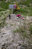 Falfurrias, Texas USA. Unknown male remains. Graves in Sacred Heart Cemetery where the remains of unidentified migrants who dies crossing the border are buried. Dozens of migrants without legal papers... - Jim West - 2010s,2013,aluminium,America,americans,Belief,border,border borders,border control,border controls,borders,Brooks County,burial,buried,cemeteries,cemetery,Cemetery Cemeteries,checkpoint,cross,cross cr