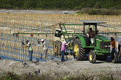 Immokalee, Florida - Workers place stakes in rows where tomatoes will grow. - Jim West - American,2010s,2014,agricultural,agriculture,America,American,americans,BAME,BAMEs,BME,bmes,by hand,capitalism,capitalist,crop,crops,Diaspora,diversity,driver,drivers,driving,EARNINGS,EBF,Economic,Eco