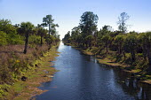 Naples, Florida - A canal in the Picayune Strand State Forest near Everglades National Park, where the Army Corps of Engineers is in the midst of a wetlands restoration project that is part of the Com... - Jim West - 14-02-2014