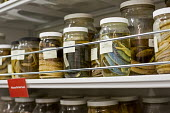 Salt Lake City, Utah - The Natural History Museum of Utah at the Rio Tinto Center on the University of Utah campus. Jars hold the museum's snake collection. - Jim West - 15-11-2014