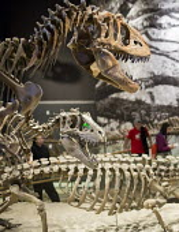 Salt Lake City, Utah - The Natural History Museum of Utah at the Rio Tinto Center on the University of Utah campus. - Jim West - 15-11-2014