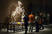 Salt Lake City, Utah - The Natural History Museum of Utah at the Rio Tinto Center on the University of Utah campus. Visitors view a special exhibition on the horse. - Jim West - 15-11-2014