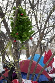Detroit, Michigan - An artificial Christmas tree decorates a tent city that homeless people have established near downtown Detroit. About 2.5 percent of Detroit residents are homeless, even as thousan... - Jim West - 09-01-2015